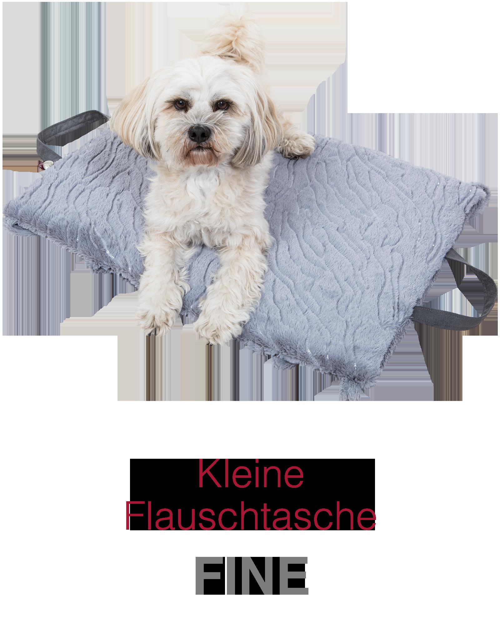 Fine – kleiner Hund, großer Beschützer